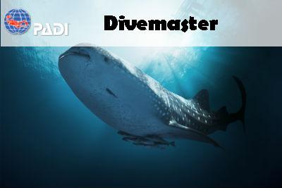 a651240a964b Become A PADI Divemaster With Saguaro Scuba In Mesa