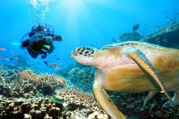 scuba certifications arizona