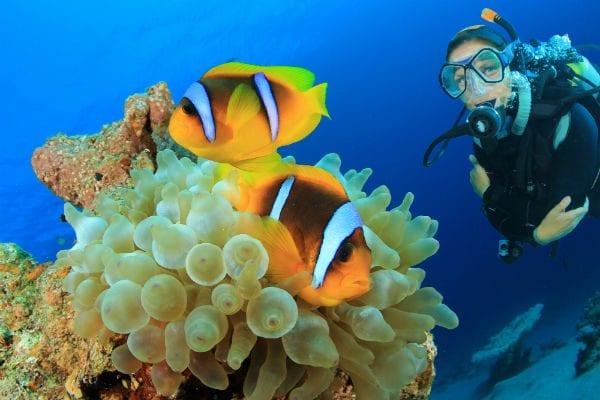 lifetime of adventure scuba
