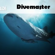 PADI ONLINE DIVEMASTER COURSE