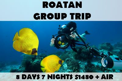 roatan-group-diving