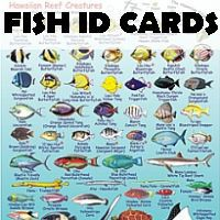 fish-id-cards
