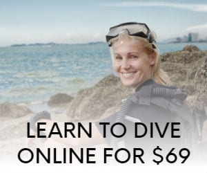 learn to dive online
